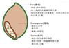 大豆异黄酮 (大豆提取物)